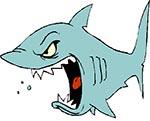 Magnet fishing shark